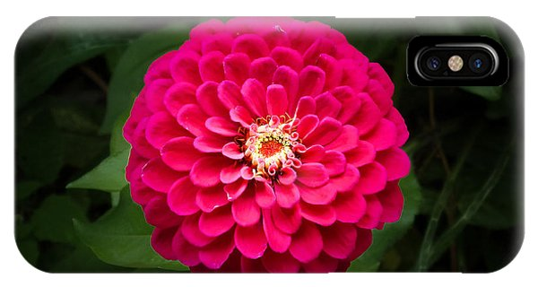Zinnia In Bloom IPhone Case