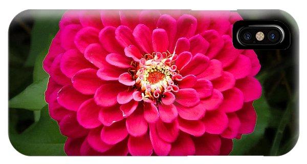 Zinnia In Bloom Square IPhone Case