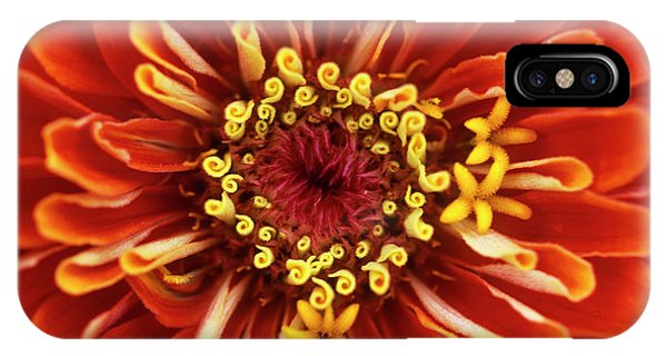 Zinnia (zinnia 'dreamland Coral') Phone Case by Jane Sugarman/science Photo Library