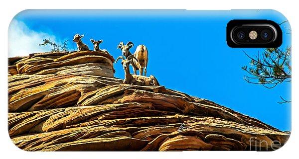 Rocky Mountain Bighorn Sheep iPhone Case - Zion Bighorn Sheep by Robert Bales