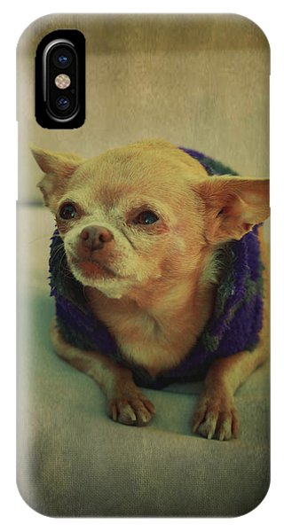 Chihuahua iPhone Case - Zozo by Laurie Search