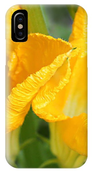 Zucchini Flowers In May IPhone Case
