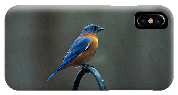 Crossville iPhone X Case -  Eastern Bluebird On Perch 2 by Douglas Barnett