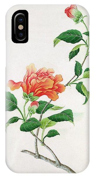 Hibiscus Flower iPhone Case -  Hibiscus by Georg Dionysius Ehret