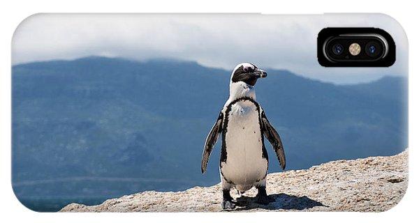 African Penguin IPhone Case