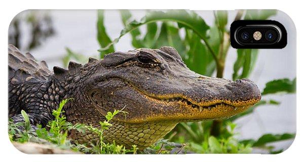 Alligator IPhone Case
