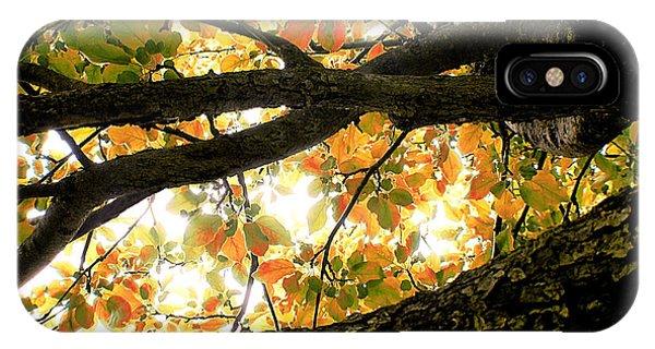 Beneath The Autumn Wolf River Apple Tree IPhone Case