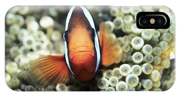 Amphiprion Melanopus iPhone Case - Black Anemone Fish by Georgette Douwma