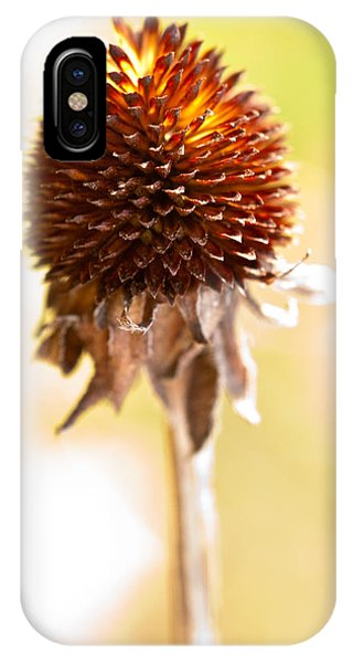 Black-eyed Susan After The Winter IPhone Case
