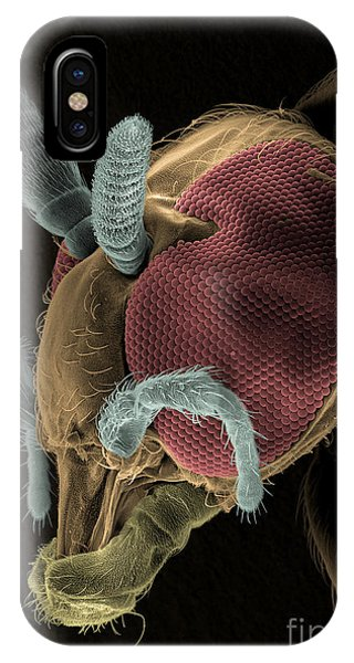 Pterygota iPhone Case - Black Fly Sem by Ted Kinsman