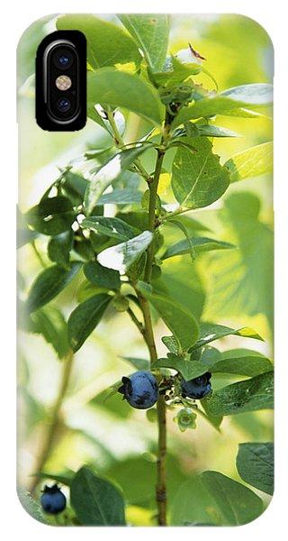 Blueberries (vaccinium Sp.) Phone Case by Veronique Leplat