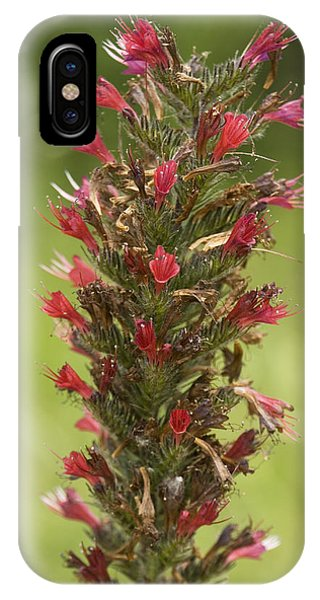 Bugloss (echium Russicum) Phone Case by Bob Gibbons