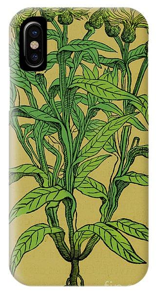 Centaurea Montana, Bachelors Button IPhone Case