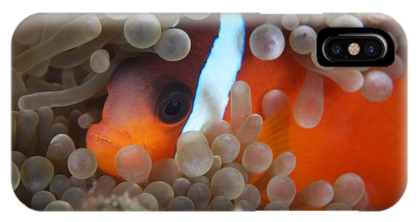 Amphiprion Melanopus iPhone Case - Cinnamon Clownfish In Its Host Anemone by Terry Moore