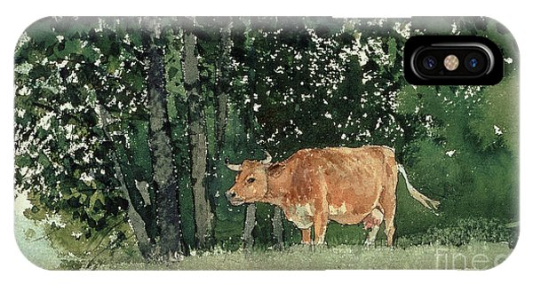 Cow In Pasture IPhone Case