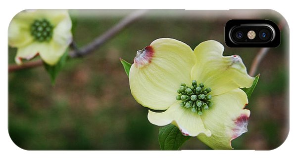Dogwood Flowers IPhone Case
