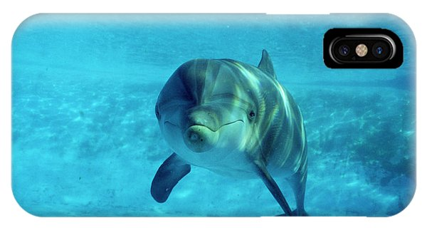 Dolphin In Captivity Phone Case by Alexis Rosenfeld