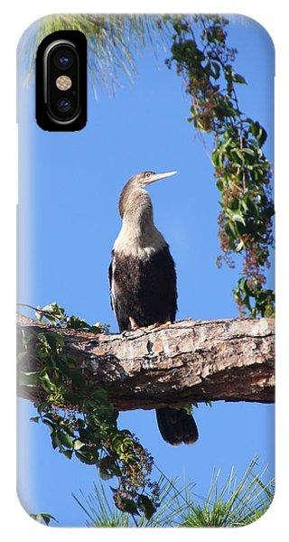 Female Anhinga Phone Case by Rosalie Scanlon