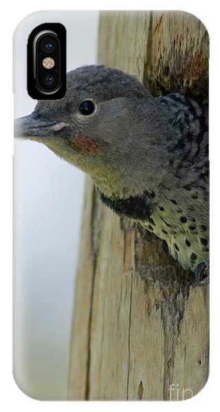 Northern Flicker iPhone Case - Flicker by Mitch Shindelbower