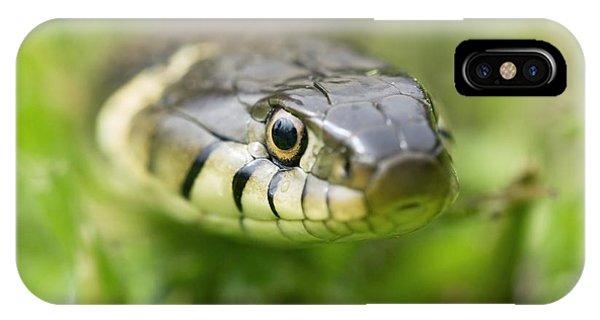 Grass Snake Phone Case by Adrian Bicker