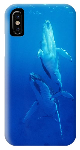 Humpback Whale Mother And Calf Phone Case by Alexis Rosenfeld