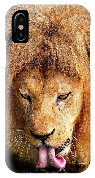 Lion Drinking IPhone Case