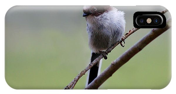 Long Tailed Tit IPhone Case