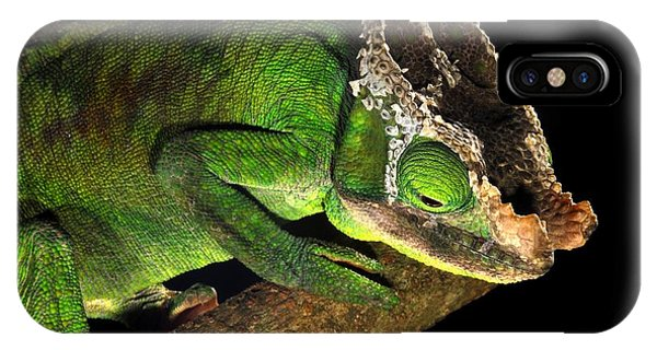Male Parson's Chameleon Phone Case by Alexis Rosenfeld