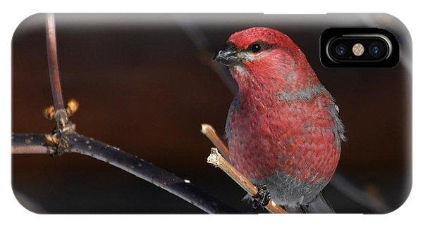 Male Pine Grosbeak IPhone Case