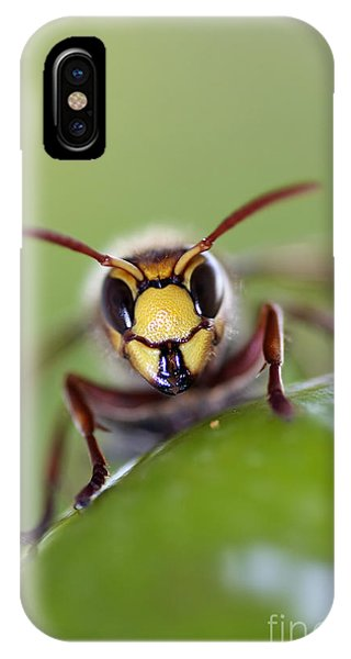 Mandibles IPhone Case