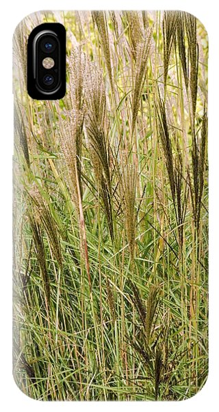 Miscanthus 'kleine Silberspinne' Phone Case by Adrian Thomas