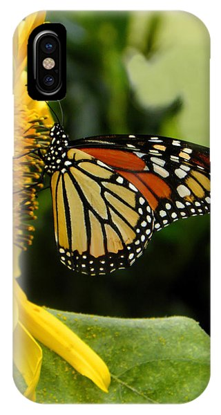 Monarch And The Sunflower IPhone Case