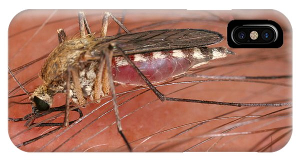 Pterygota iPhone Case - Mosquito Biting A Human by Ted Kinsman