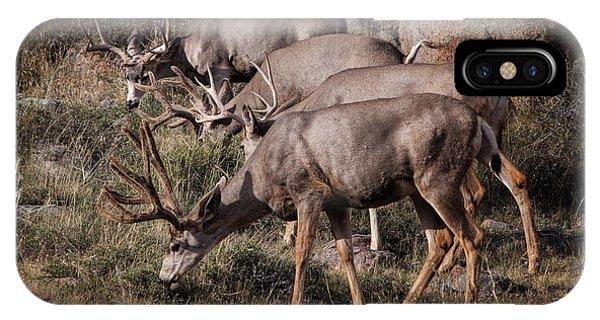 Mule Deer Bucks IPhone Case