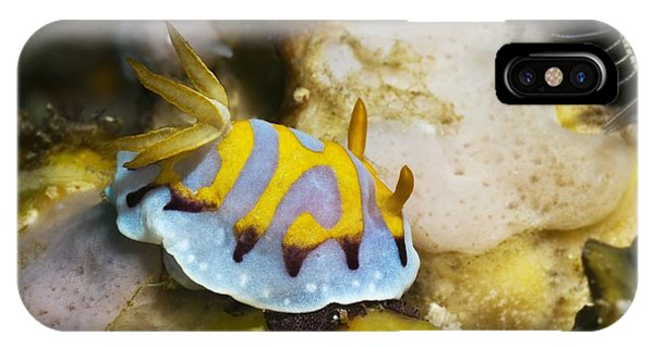 Nudibranch Phone Case by Georgette Douwma