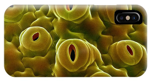 Open Stomata, Sem Phone Case by Dr Jeremy Burgess