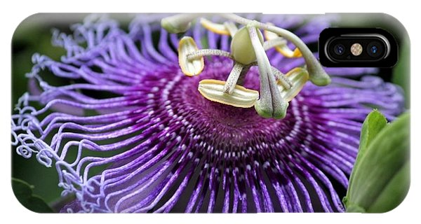 Passion Flower Phone Case by Theresa Willingham