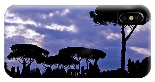 Umbrella Pine iPhone Case - Pine Trees by Joana Kruse