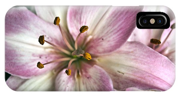 Pink Asiatic Lily IPhone Case
