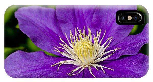 Purple Clematis Flower IPhone Case