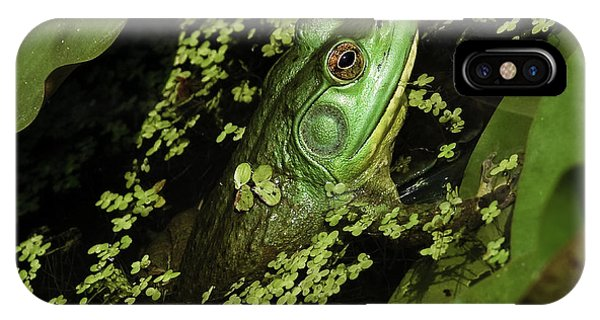 Rana Clamitans Or Green Frog IPhone Case