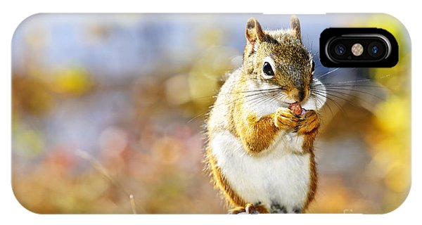 Fall iPhone Case - Red Squirrel by Elena Elisseeva