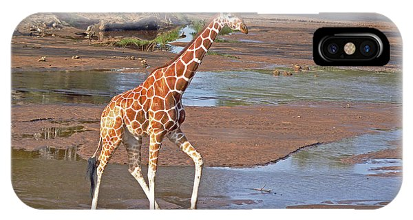 Reticulated Giraffe IPhone Case