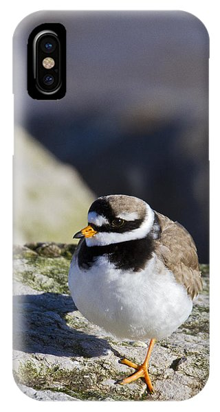 Ringed Plover IPhone Case