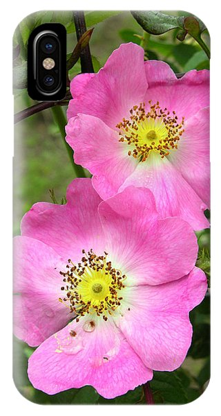 Roses (rosa Sp.) Phone Case by Tony Craddock