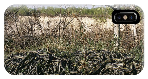 Snakes Mating Phone Case by Alan Sirulnikoff