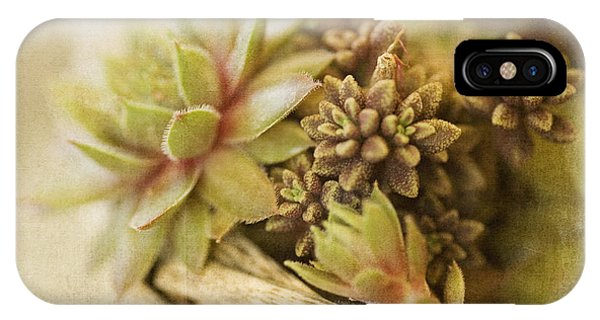 Succulent iPhone Case - Succulents by Bonnie Bruno