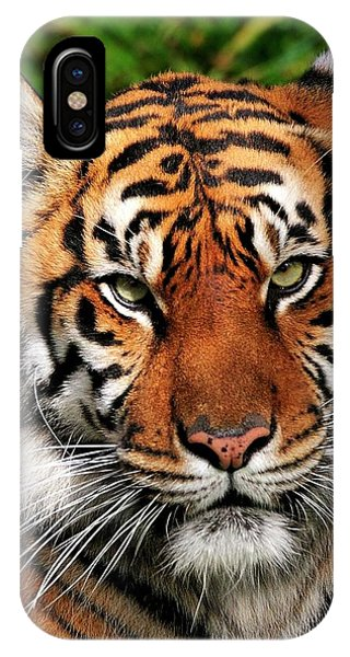 Sumatran Tiger Portrait IPhone Case