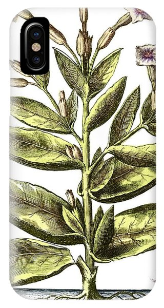 Tobacco Plant, 17th Century Artwork Phone Case by Middle Temple Library