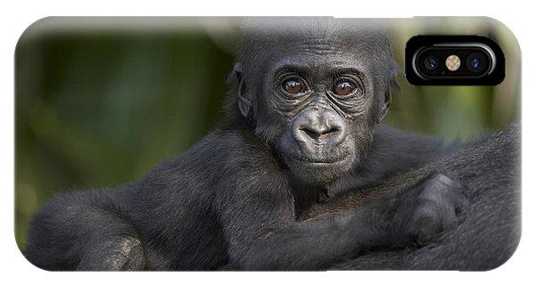 Western Lowland Gorilla Gorilla Gorilla IPhone Case